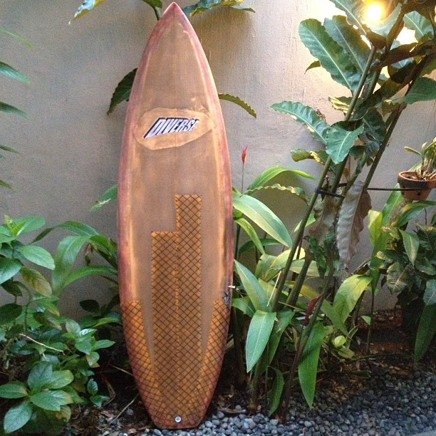 The #rotten #carrot #surfboards are not #vegetables